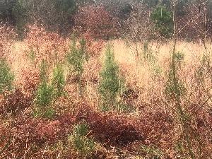GROUPEMENT FORESTIER DANS LES LANDES
