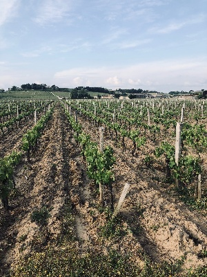 PROPRIETE 3HA ST EMILION GD CRU